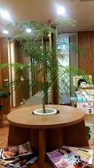 今週の植物