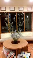 今週の死植物